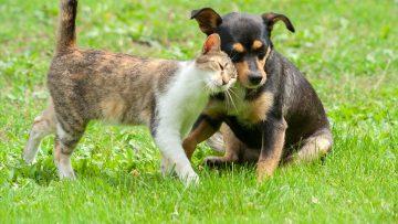 Rote Karte für den Floh: So bleibt Ihr Haustier verschont